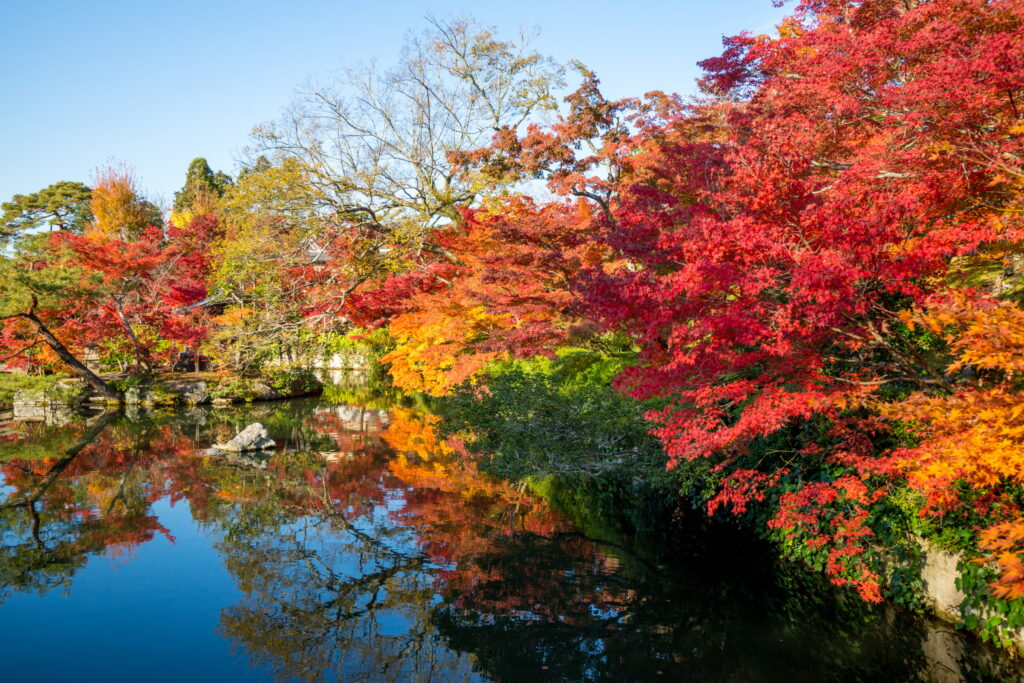 autumn trees over water - learn kung fu online