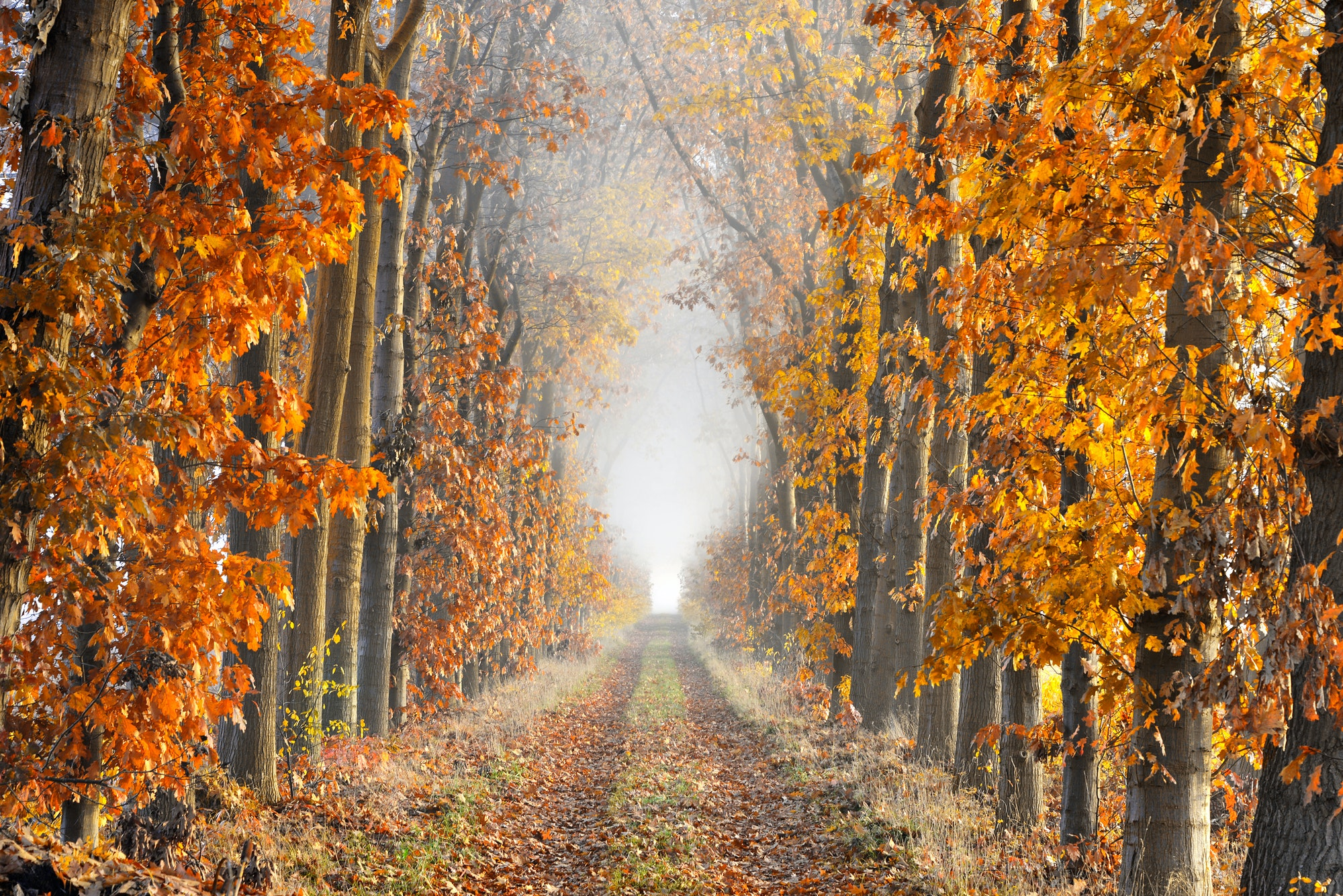 Diminishing perspective in a lane in autumn